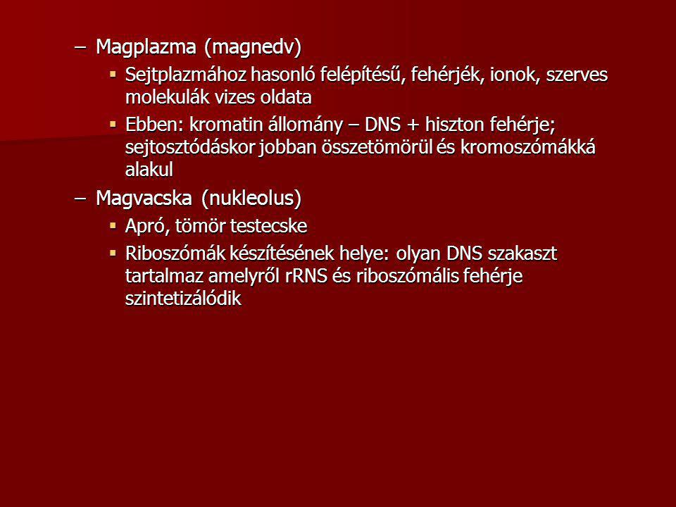 Magvacska (nukleolus)