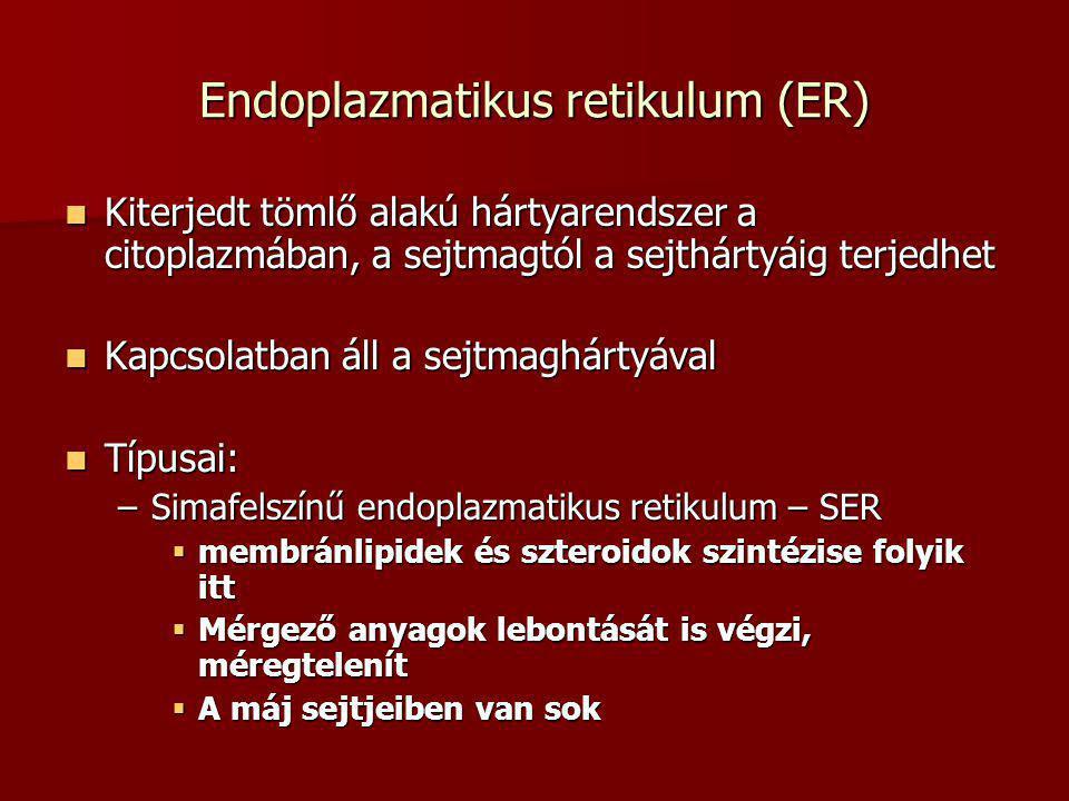 Endoplazmatikus retikulum (ER)
