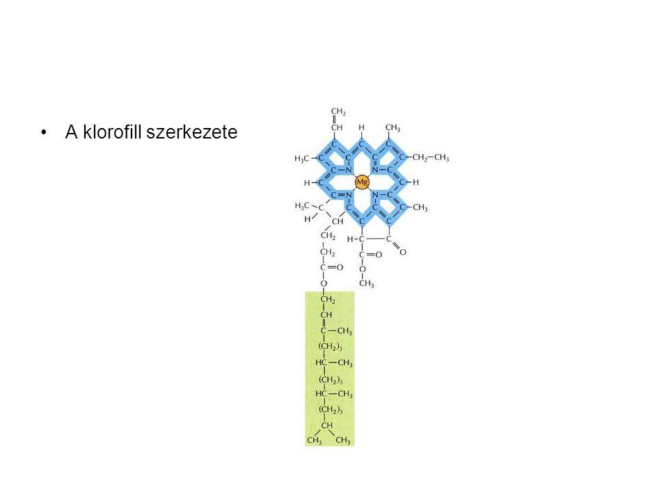 A klorofill szerkezete