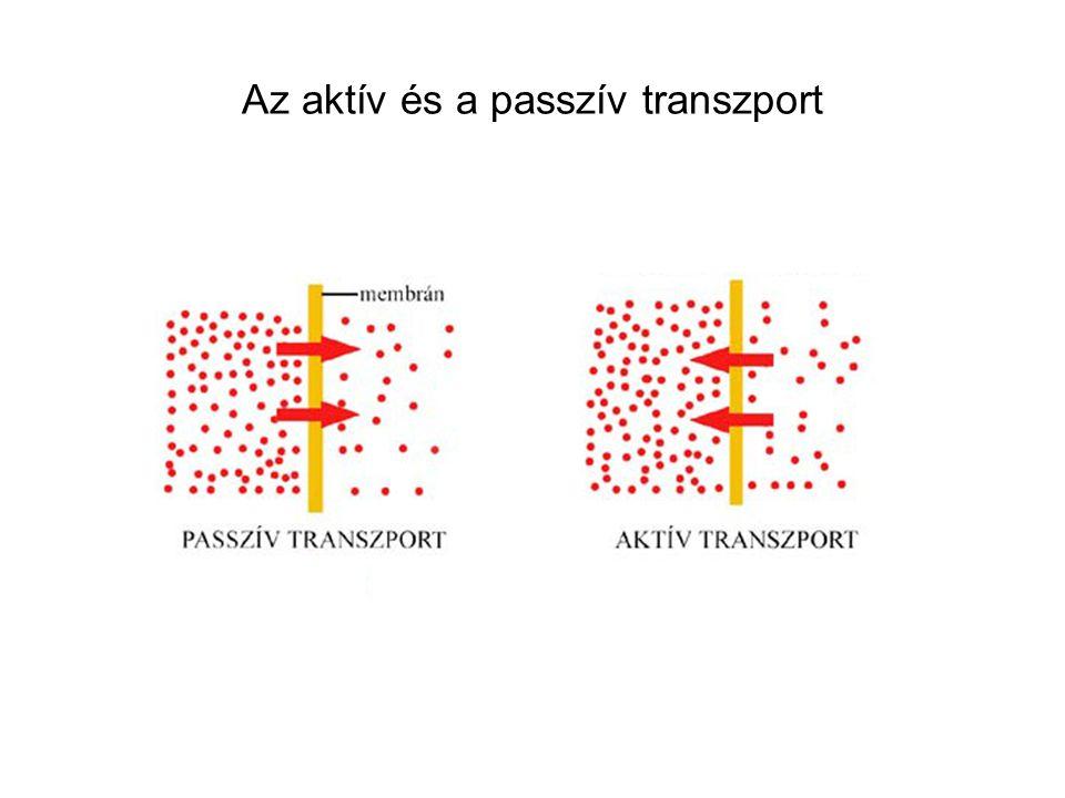 Az aktív és a passzív transzport