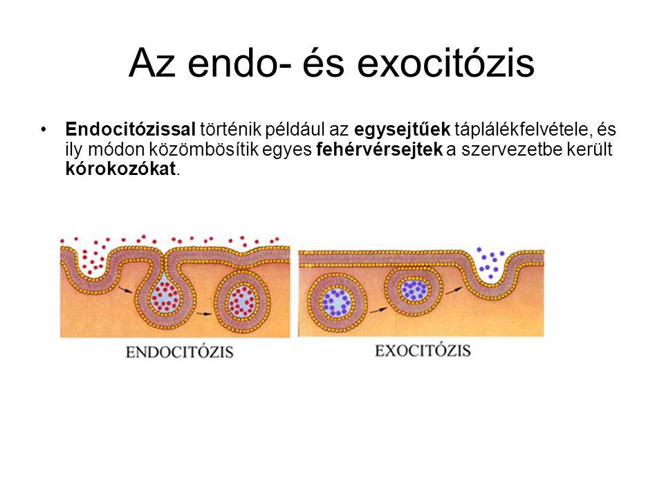 Az endo- és exocitózis