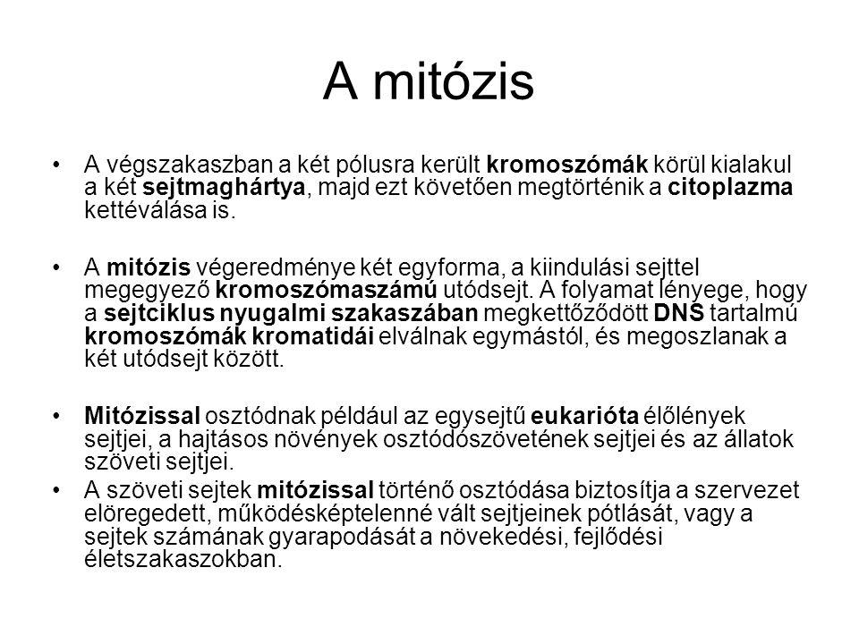 A mitózis