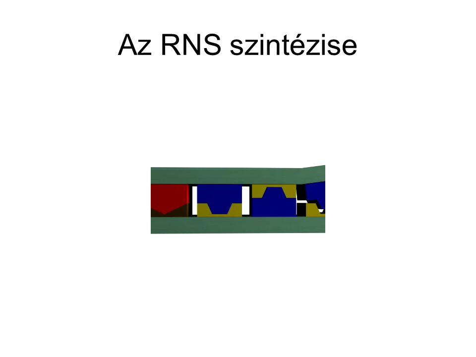 Az RNS szintézise
