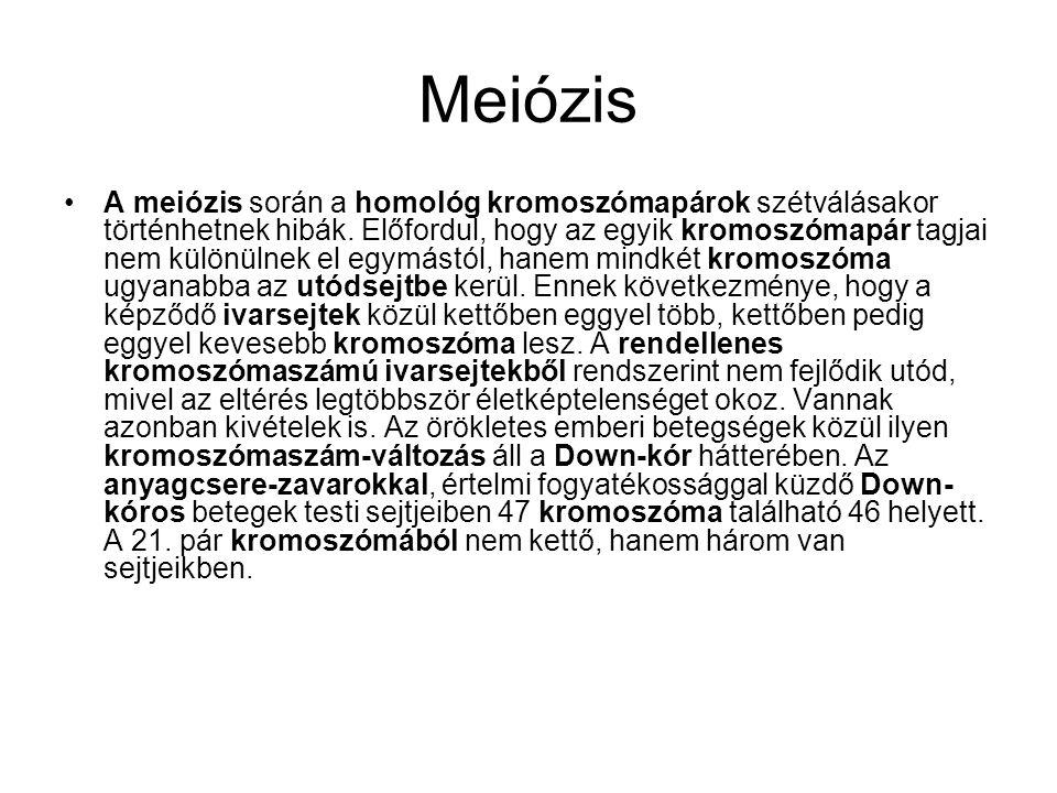 Meiózis