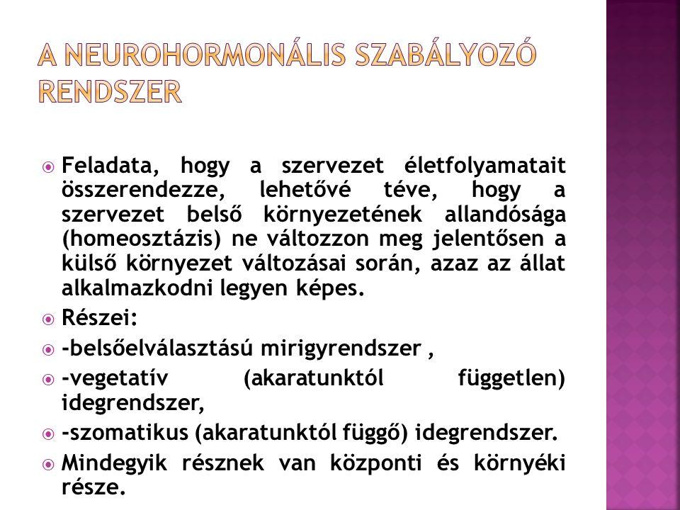 A NEUROHORMONÁLIS SZABÁLYOZÓ RENDSZER
