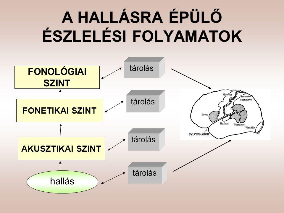 A HALLÁSRA ÉPÜLŐ ÉSZLELÉSI FOLYAMATOK