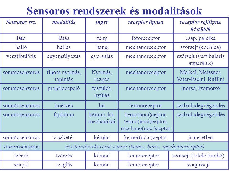 Sensoros rendszerek és modalitások