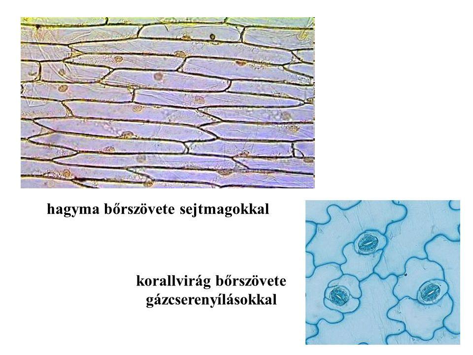 korallvirág bőrszövete