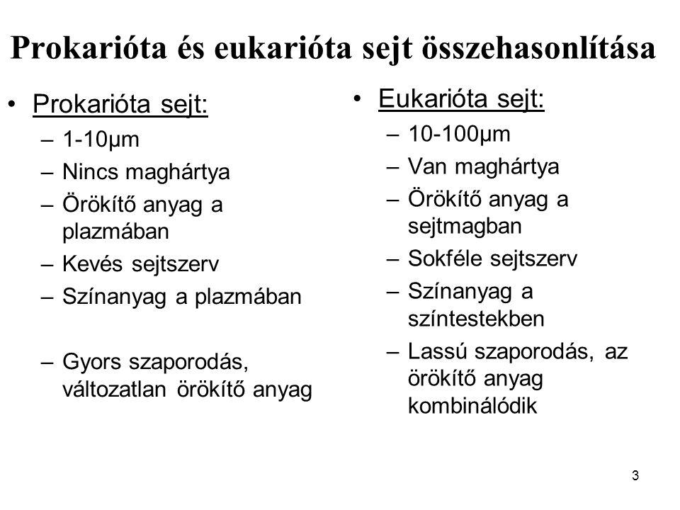 Prokarióta és eukarióta sejt összehasonlítása