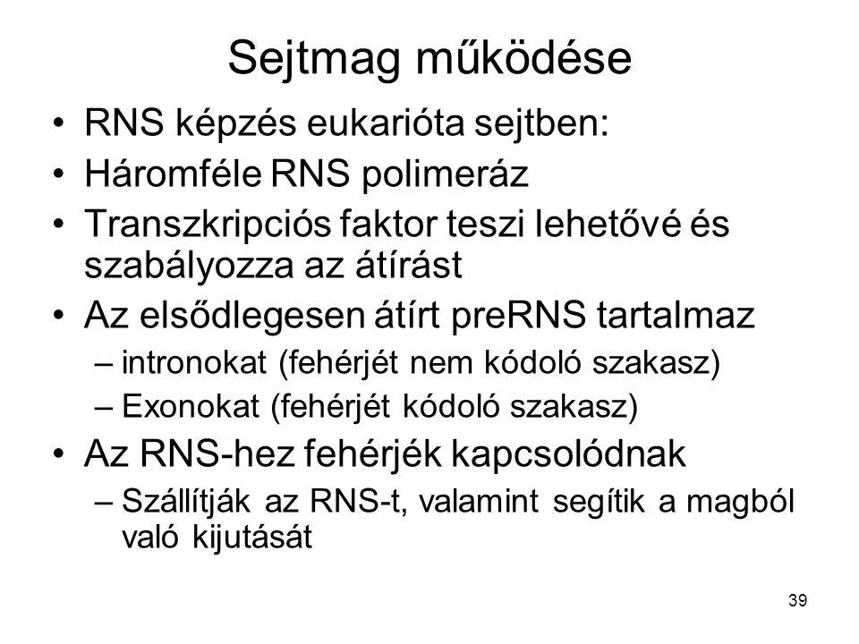 Sejtmag működése RNS képzés eukarióta sejtben: Háromféle RNS polimeráz