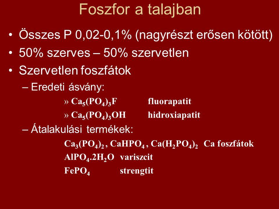 Foszfor a talajban Összes P 0,02-0,1% (nagyrészt erősen kötött)