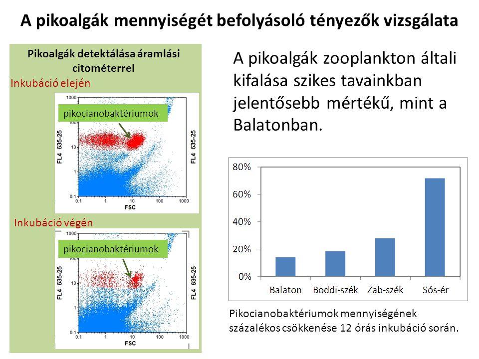 A pikoalgák mennyiségét befolyásoló tényezők vizsgálata