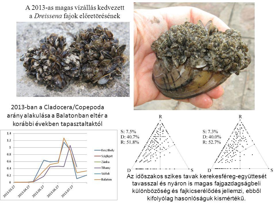 A 2013-as magas vízállás kedvezett a Dreissena fajok előretörésének