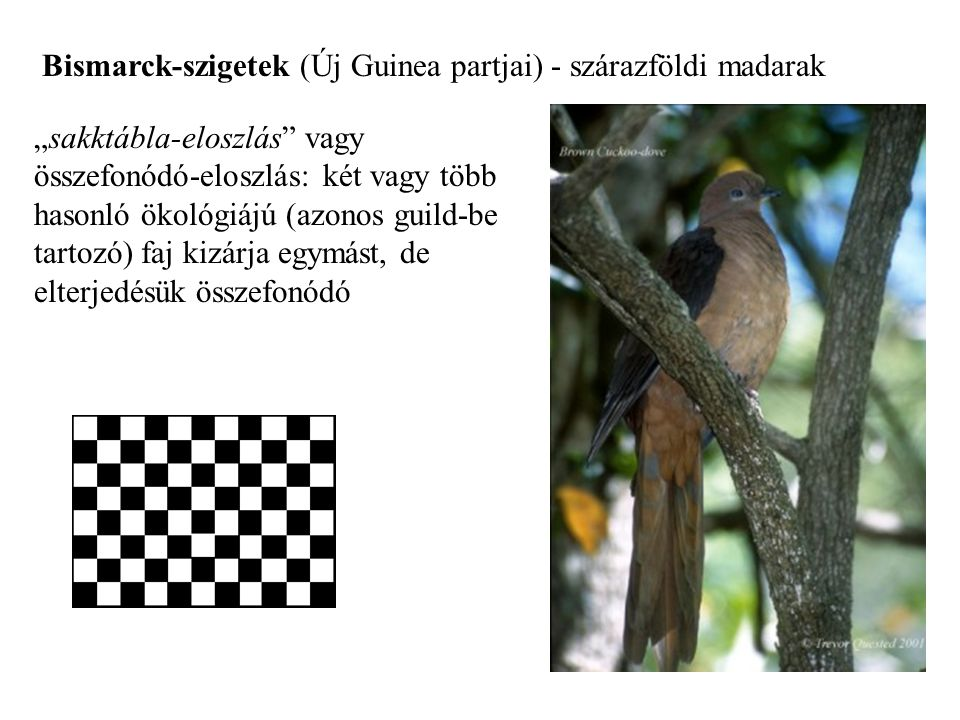 Bismarck-szigetek (Új Guinea partjai) - szárazföldi madarak