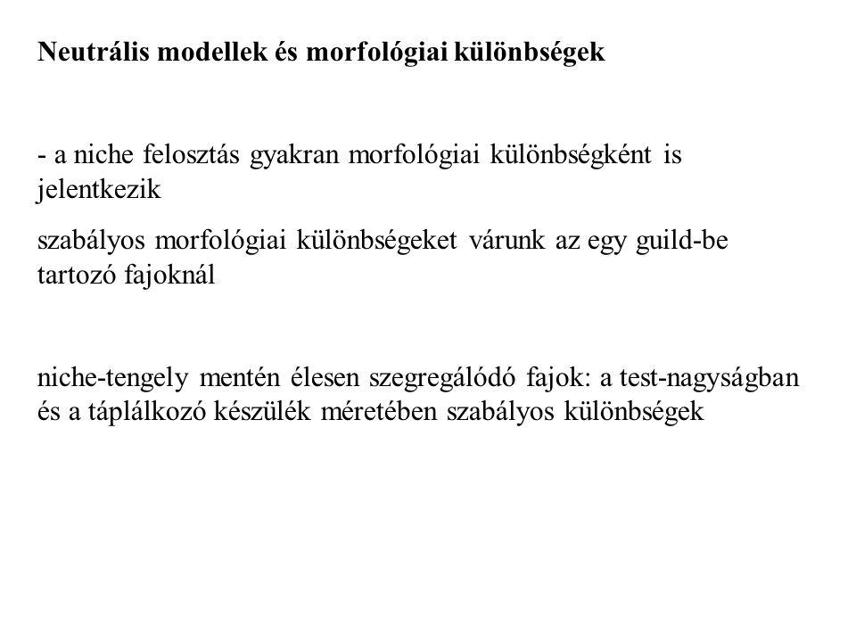 Neutrális modellek és morfológiai különbségek