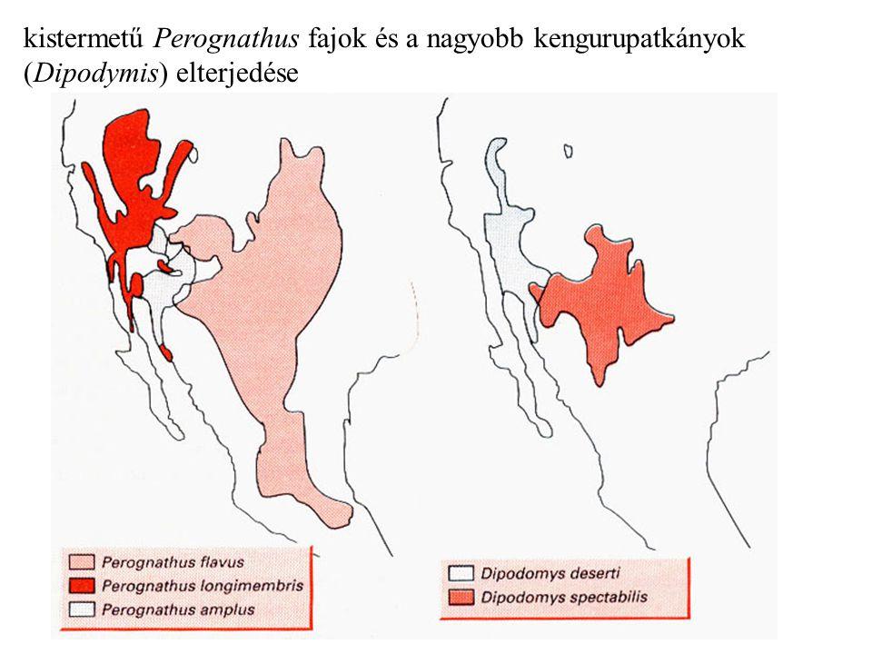 kistermetű Perognathus fajok és a nagyobb kengurupatkányok (Dipodymis) elterjedése