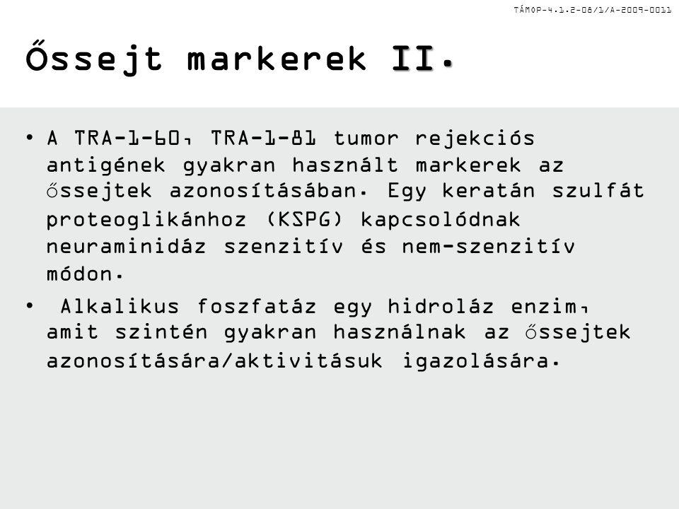 Őssejt markerek II.