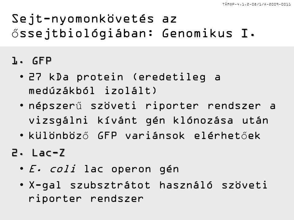 Sejt-nyomonkövetés az őssejtbiológiában: Genomikus I.