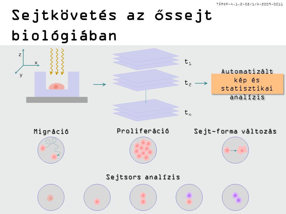 Sejtkövetés az őssejt biológiában