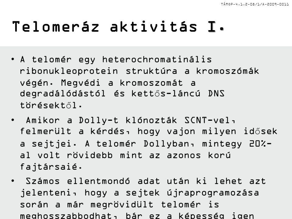 Telomeráz aktivitás I.