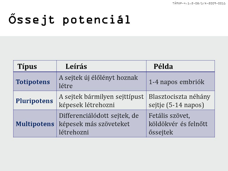 Őssejt potenciál Típus Leírás Példa Totipotens