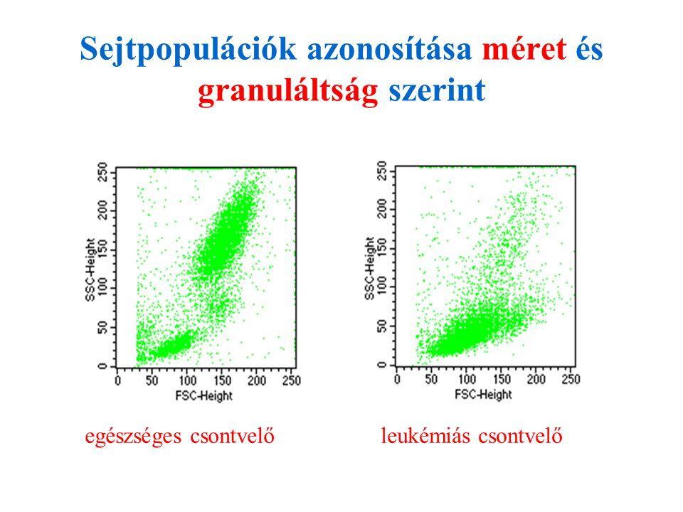 Sejtpopulációk azonosítása méret és granuláltság szerint
