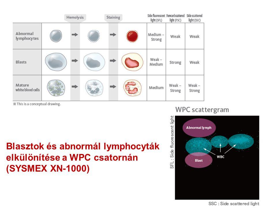 Blasztok és abnormál lymphocyták