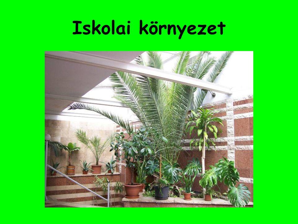 """Iskolai környezet Iskolai környeztünk """"zöldítésének egyik formája a zöld növények számának növelése (befogadás), azok gondozása, szaporítása."""
