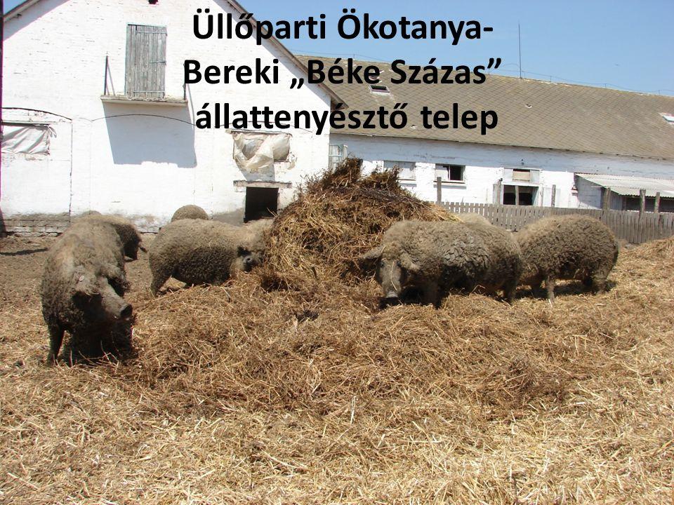 """Üllőparti Ökotanya- Bereki """"Béke Százas állattenyésztő telep"""