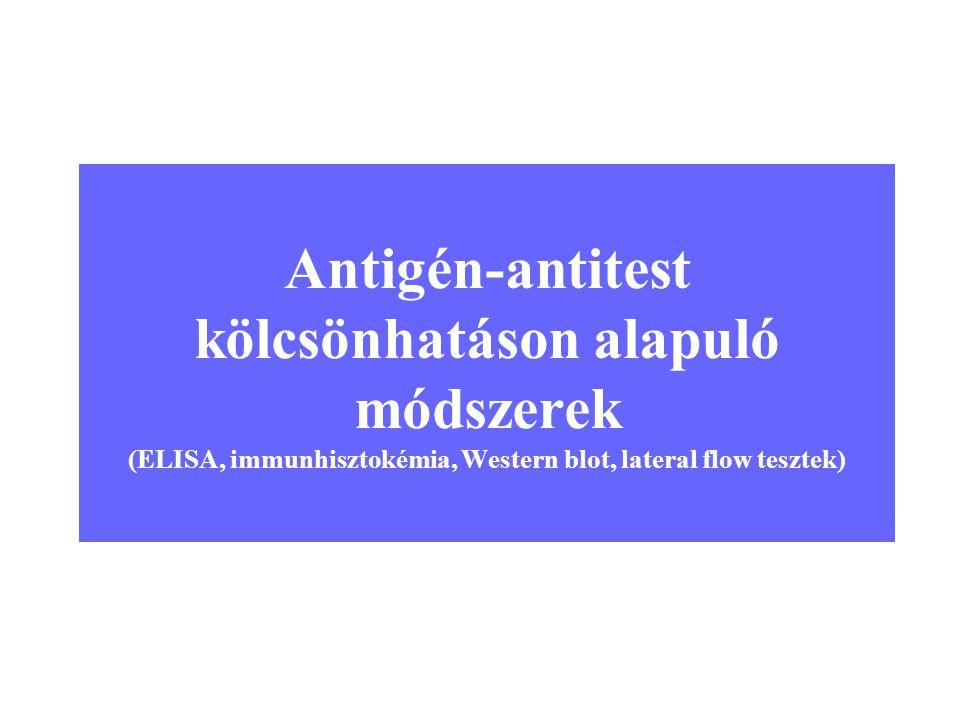 Antigén-antitest kölcsönhatáson alapuló módszerek (ELISA, immunhisztokémia, Western blot, lateral flow tesztek)