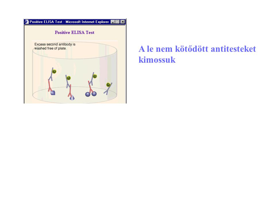 A le nem kötődött antitesteket kimossuk