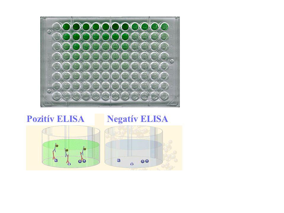 Pozitív ELISA Negatív ELISA 30