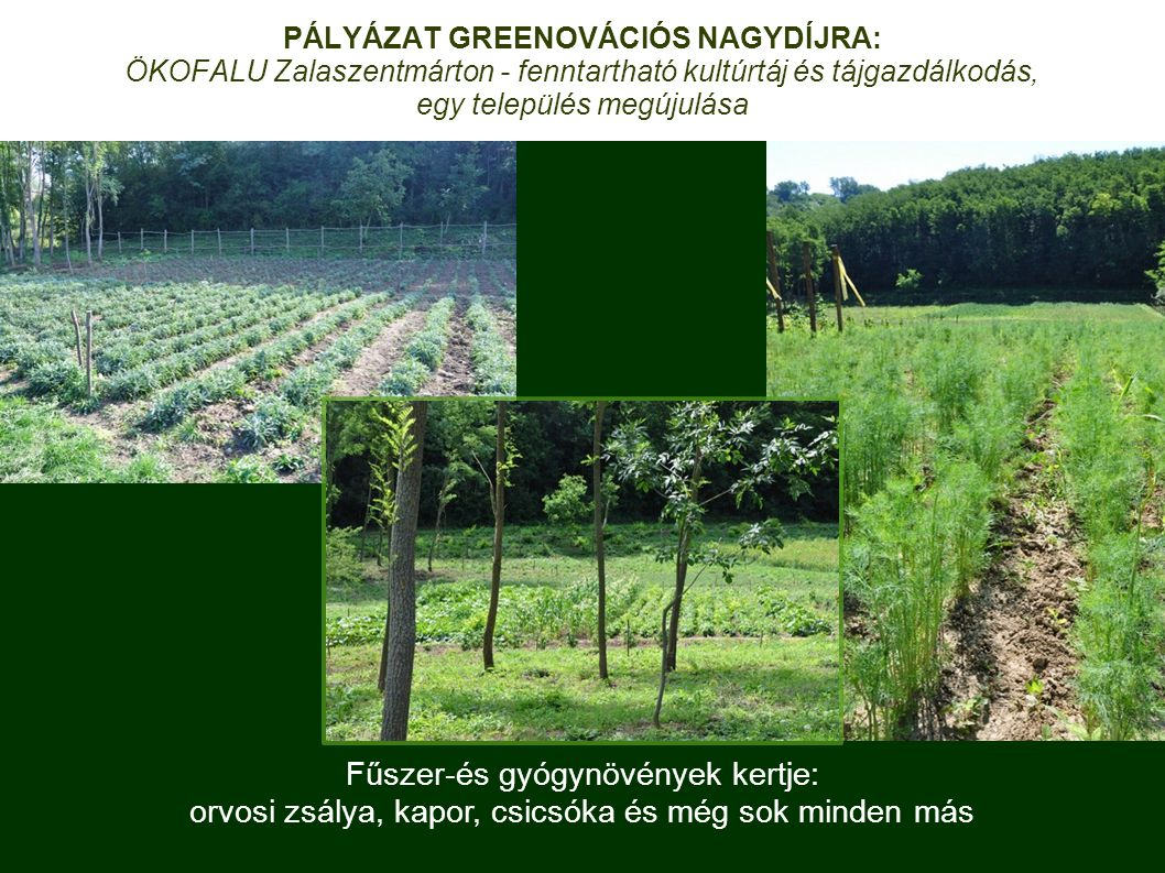 Fűszer-és gyógynövények kertje:
