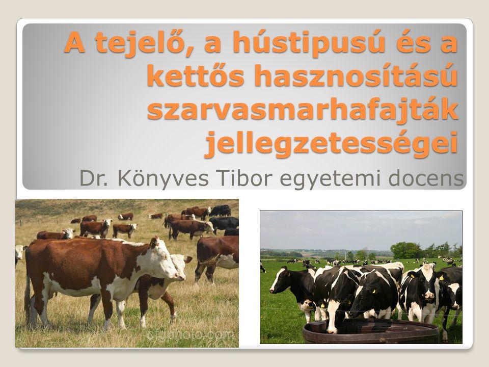 Dr. Könyves Tibor egyetemi docens