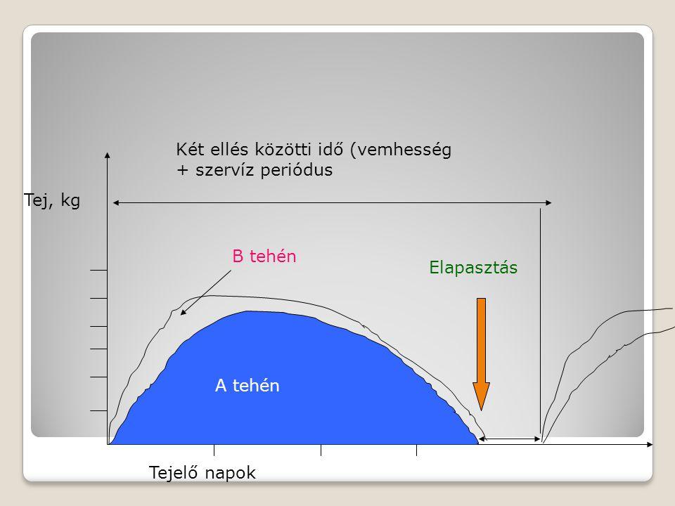 Két ellés közötti idő (vemhesség + szervíz periódus