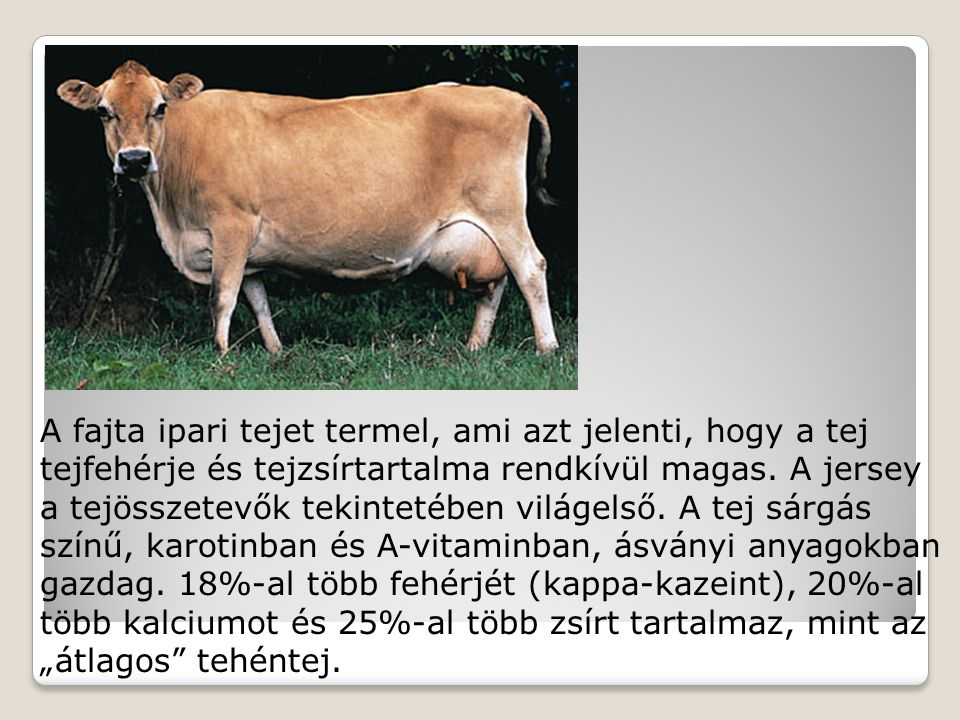 A fajta ipari tejet termel, ami azt jelenti, hogy a tej tejfehérje és tejzsírtartalma rendkívül magas.