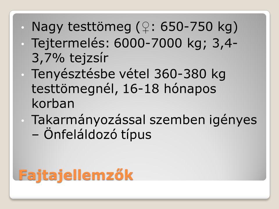 Fajtajellemzők Nagy testtömeg (♀: 650-750 kg)