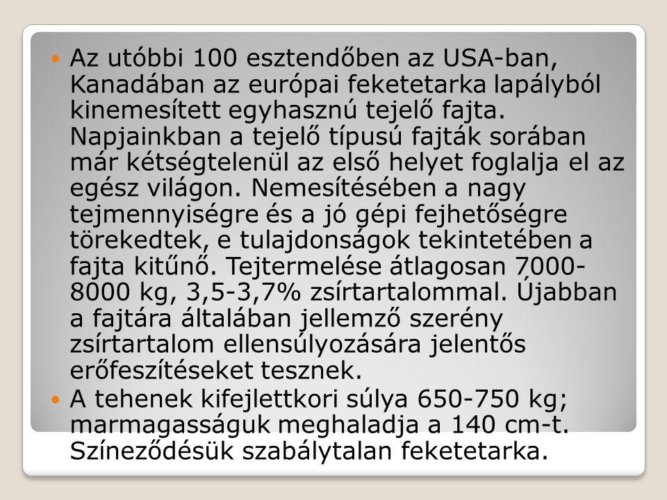 Az utóbbi 100 esztendőben az USA-ban, Kanadában az európai feketetarka lapályból kinemesített egyhasznú tejelő fajta. Napjainkban a tejelő típusú fajták sorában már kétségtelenül az első helyet foglalja el az egész világon. Nemesítésében a nagy tejmennyiségre és a jó gépi fejhetőségre törekedtek, e tulajdonságok tekintetében a fajta kitűnő. Tejtermelése átlagosan 7000- 8000 kg, 3,5-3,7% zsírtartalommal. Újabban a fajtára általában jellemző szerény zsírtartalom ellensúlyozására jelentős erőfeszítéseket tesznek.