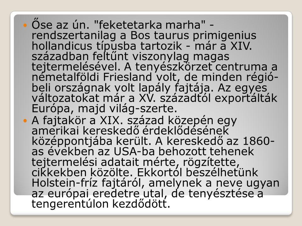 Őse az ún. feketetarka marha - rendszertanilag a Bos taurus primigenius hollandicus típusba tartozik - már a XIV. században feltűnt viszonylag magas tejtermelésével. A tenyészkörzet centruma a németalföldi Friesland volt, de minden régió- beli országnak volt lapály fajtája. Az egyes változatokat már a XV. századtól exportálták Európa, majd világ-szerte.