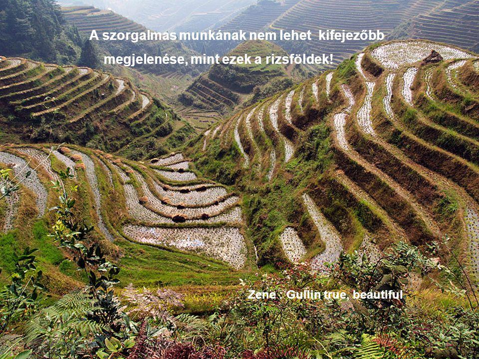 megjelenése, mint ezek a rizsföldek!