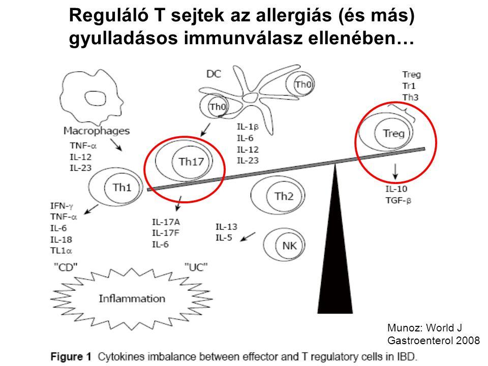 Reguláló T sejtek az allergiás (és más) gyulladásos immunválasz ellenében…