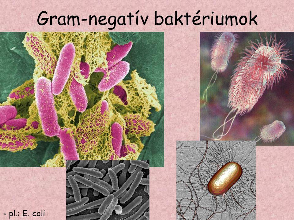 Gram-negatív baktériumok