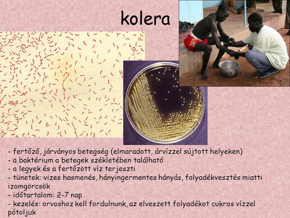 kolera - fertőző, járványos betegség (elmaradott, árvízzel sújtott helyeken) - a baktérium a betegek székletében található.