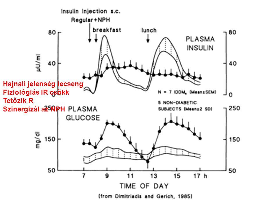 Hajnali jelenség lecseng Fiziológiás IR csökk Tetőzik R