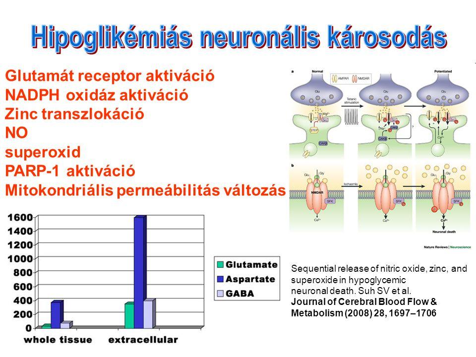 Hipoglikémiás neuronális károsodás