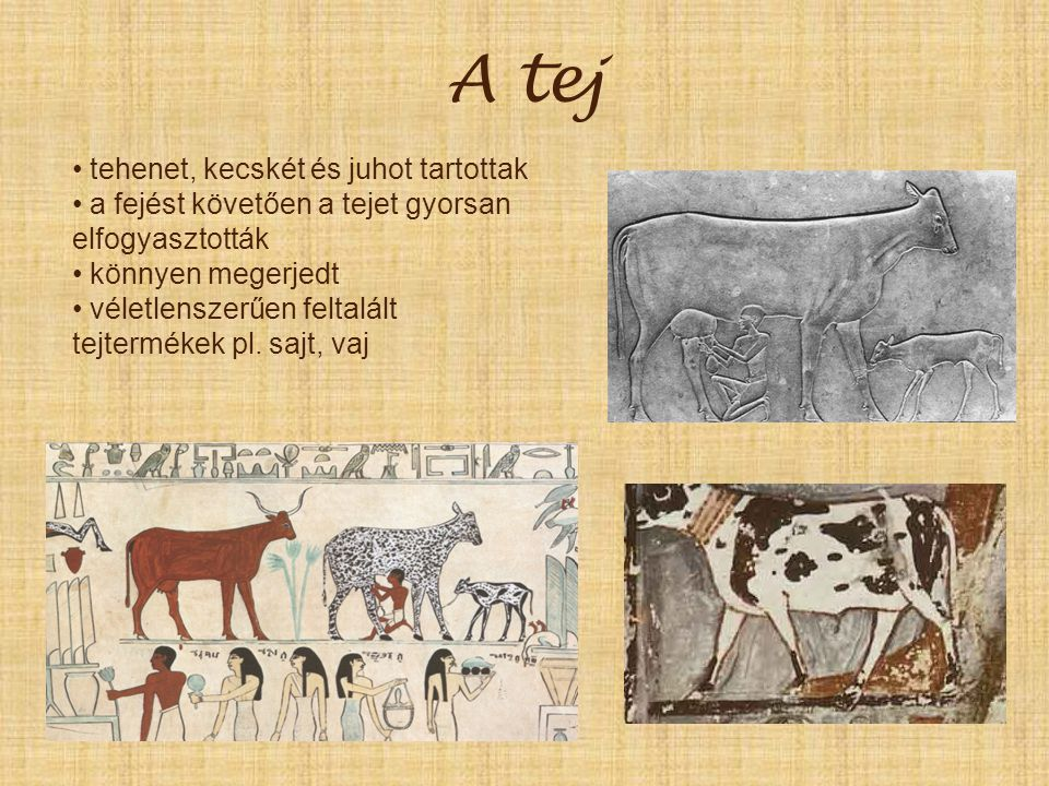 A tej tehenet, kecskét és juhot tartottak