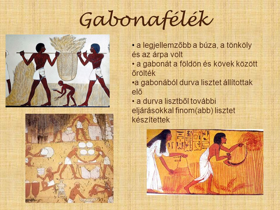 Gabonafélék a legjellemzőbb a búza, a tönköly és az árpa volt