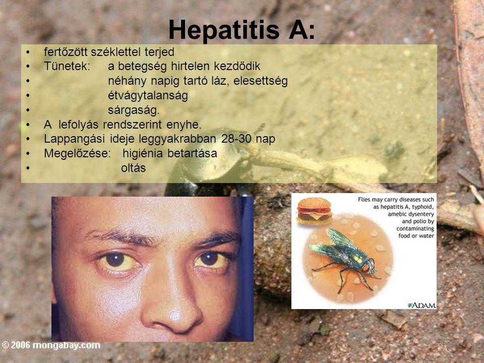 Hepatitis A: fertőzött széklettel terjed