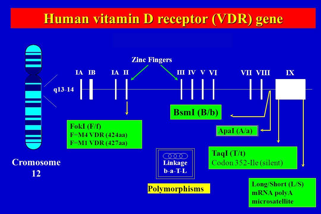 Human vitamin D receptor (VDR) gene