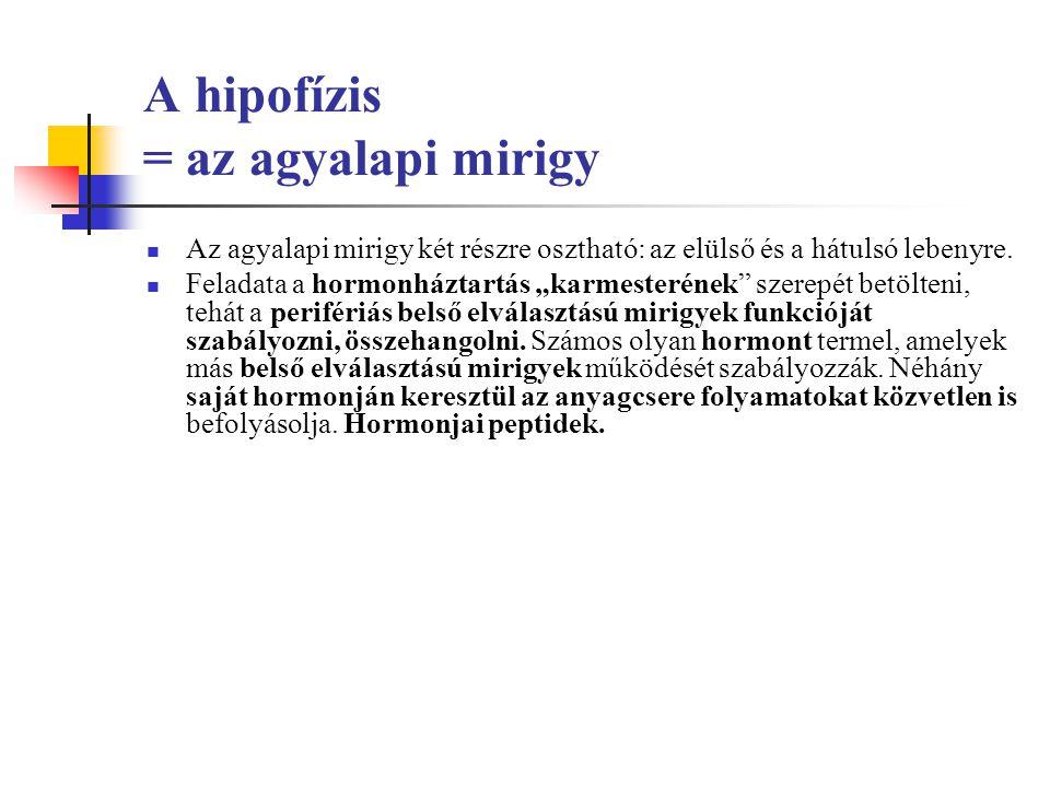 A hipofízis = az agyalapi mirigy